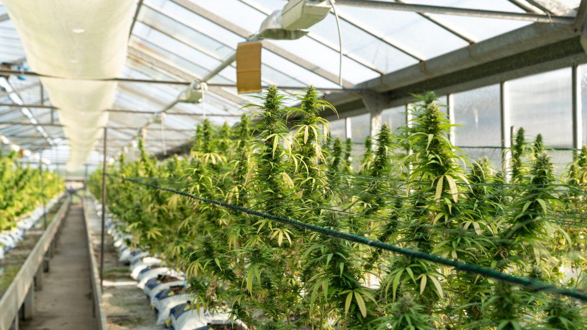 Medical Marijuana Uses's.