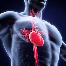 Which is the Best Heart Surgery Hospital In Pune?