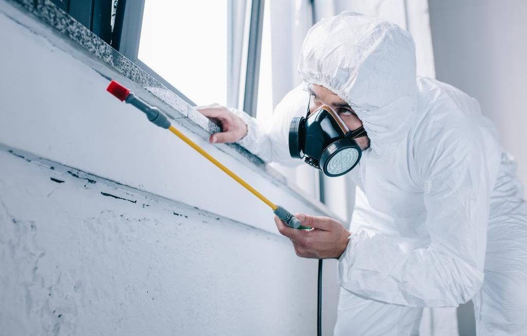 Useful Tips To Help You Conquer A Pest Problem